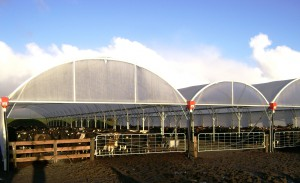 Customised dairy shelters